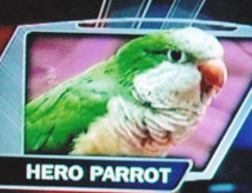 Willy the Parrot